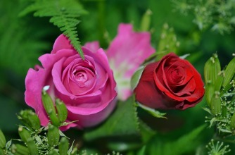 roses-208980_960_720